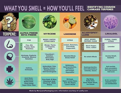 the medicinal value of terpene testing cannabis kurple magazine cannabis terpenes what you smell is how you ll feel visual ly