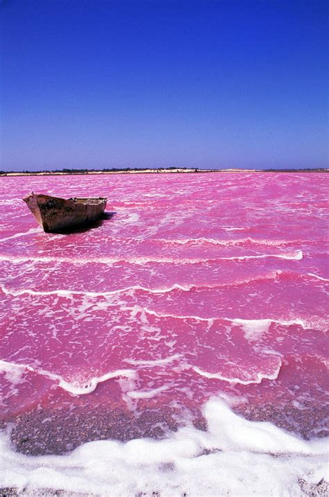 pink lake natural pink lake retba senegal