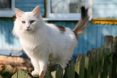 how to get rid of cats in backyard how to get rid of cats in your backyard home guides sf