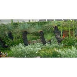 roof top garden ravalli county mt service provider of vertical wall gardens roof top