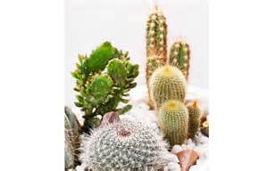 plante d int 233 rieur les cactus plantes d int 233 rieur