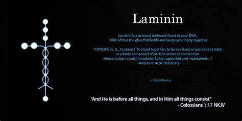 protein laminin laminin explore laminin on deviantart