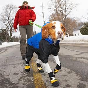 dogs wearing clothes dogs wearing clothes is it really necessary notebook