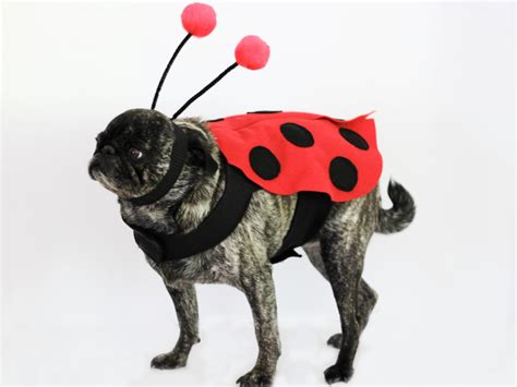 ladybugs in dogs diy ladybug costume for dogs how tos diy