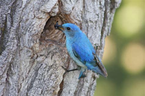 Nayara Tunik By Heaven Lights blue birds hotelroomsearch net