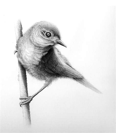 bird art drawing birds birds drawing pictures drawing pictures