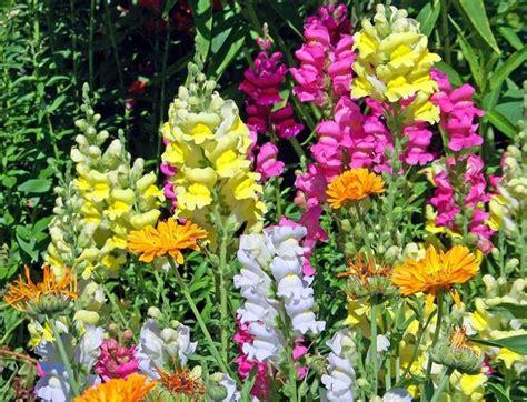 piantare fiori fiori da piantare a marzo per celebrare la primavera il