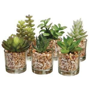 amazon succulents succulent container garden ideas car interior design
