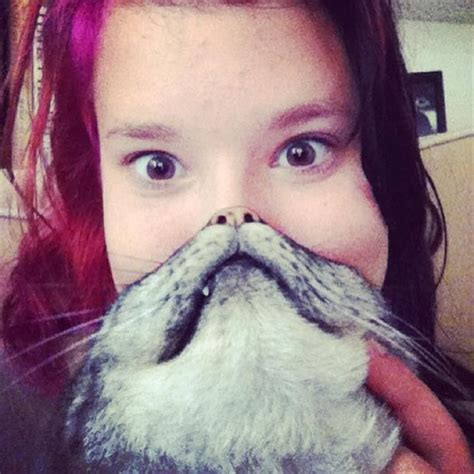 Cat Beard Meme - the best of cat beards 25 pics
