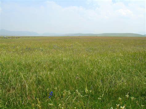 what is a prairie prairie d 233 finition c est quoi