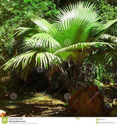 imagenes de animales y plantas de la selva palmeras y plantas de la selva tropical en la selva imagen