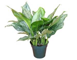 Best Air Freshener Plants 18 Best Air Filtering Plants For Your Home Stay At Home