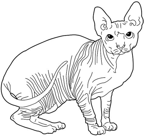 sphynx cat coloring page coloriages de chats