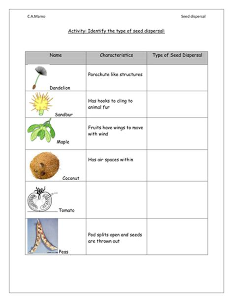 How Does Answer Garden Work Seed Dispersal Worksheet By Cheryl87 Teaching Resources