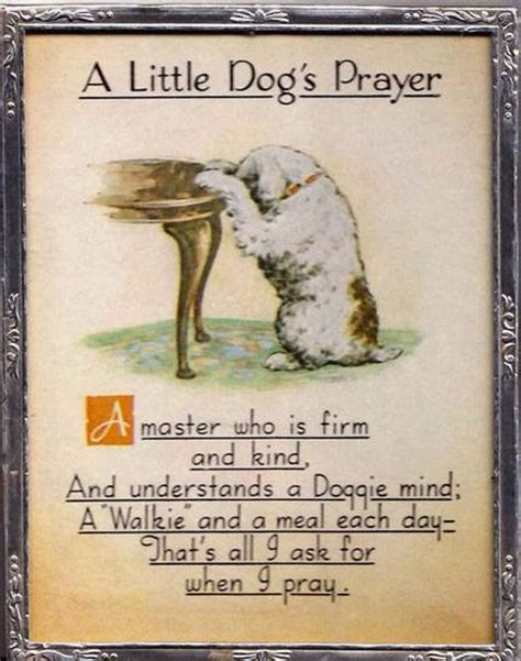 dogs prayer a s prayer shih tzu