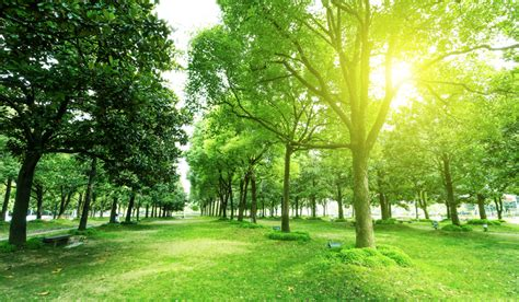 imagenes de ideas verdes la relevancia de las zonas verdes en las ciudades