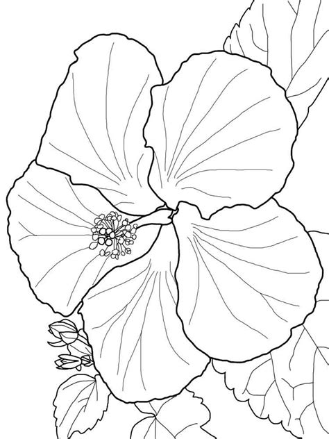 Flowers Coloring Pages Print by Hibiscus Flower Coloring Pages And Print