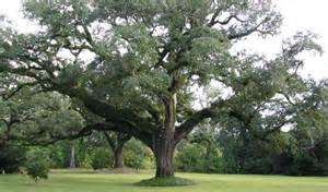 how to select the right tree for your yard today s homeowner