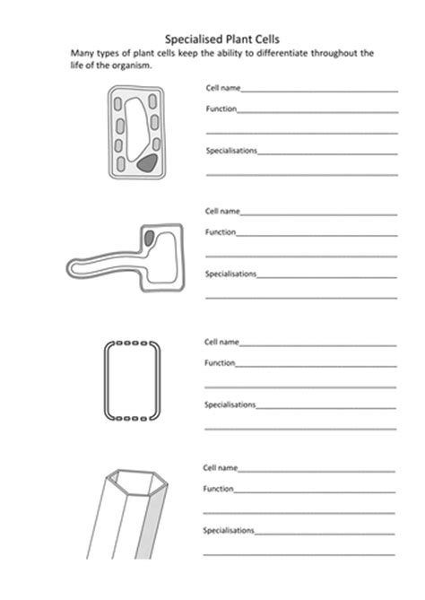 cells worksheet ks3 differentiation and specialised animal and plant cells by bennettej teaching resources tes