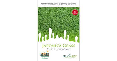 Jual Bibit Rumput Jepang jual bibit rumput jepang