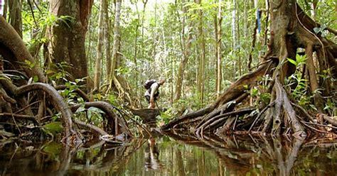 best marathon in the world jungle marathon brazil 25 best adventure marathons in