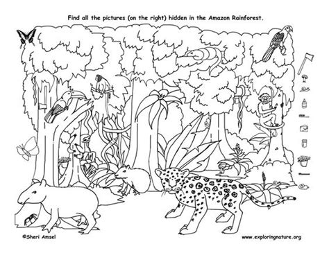 printable science hidden pictures rainforest coloring pages to print hidden pictures