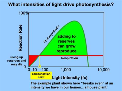 plant growth light intensity light