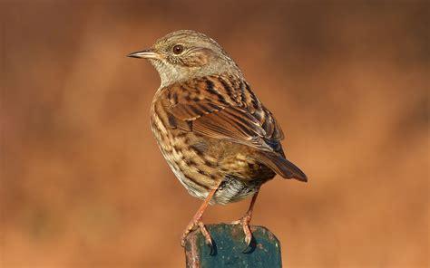 bird for the garden a kilchoan diary garden birds