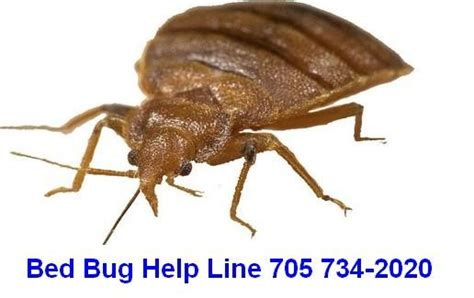 bed bug specialist bed bug specialist 28 images british airways denies
