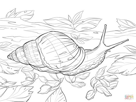 garden snail coloring page giant african land snail coloring page free printable