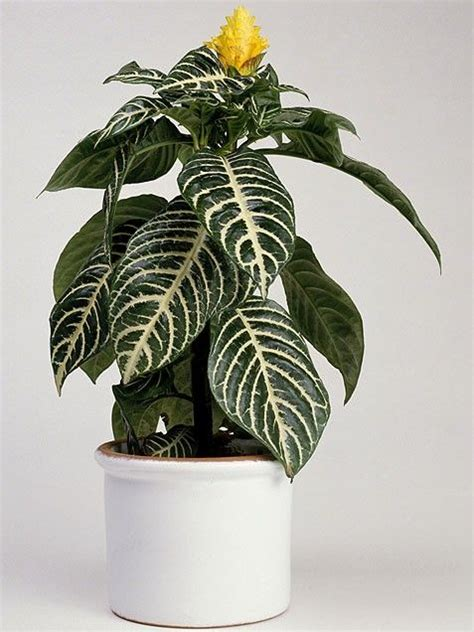 best indoor house plant best indoor plants ideal home pinterest