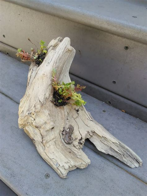 Driftwood Planter by Diy Diy Driftwood Planter