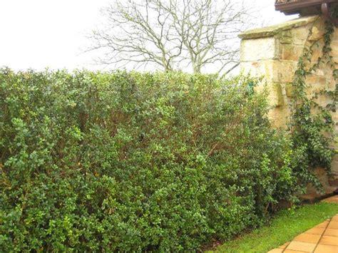 jardines setos imágenes los setos los protectores del jard 237 n plantas
