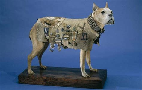 Sergeant Stubby Owner 10 Strange And Wonderful Uses Of Taxidermy Listverse