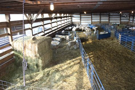 Sheep Lambing Sheds by Lambing Barns Gallery