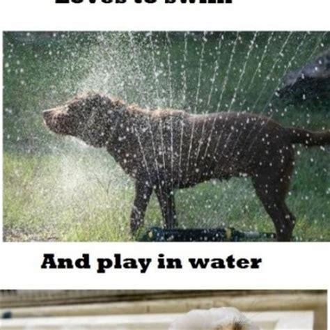 Dog Sprinkler Meme - dog sprinkler meme 28 images 32 dogs play in