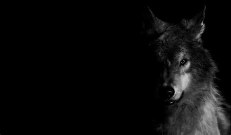 black and white anime wolves 3 background wallpaper black wolf wallpaper wallpapersafari