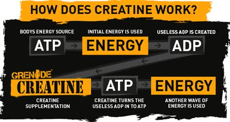 creatine what it does how does creatine work