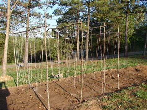 building trellises diy how to build a garden trellis for beans plans free