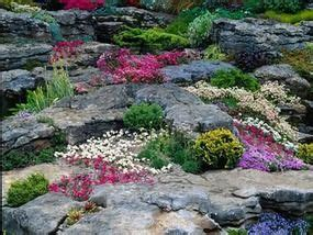 Sow Hardy Plants That Need Cold Comfort Alan Titchmarsh Rock Garden Plants Uk