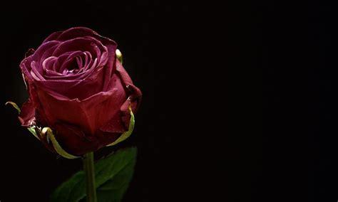 imagenes de luto rosas rosas negras de luto
