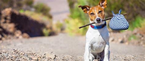 imagenes tristes x abandono weekendje weg met hond tips en idee 235 n beeztees