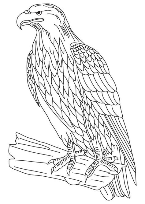Wedge Tailed Eagle Colouring Pages Eagles Pinterest Tailed Hawk Coloring Page