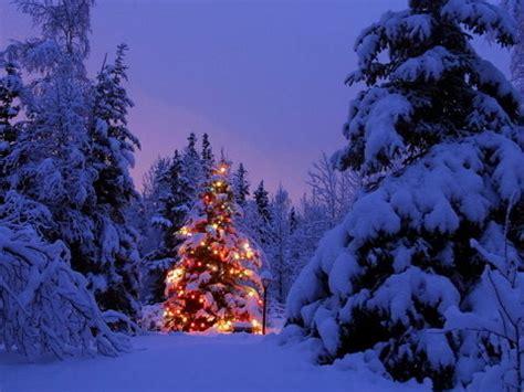netlogx beautiful christmas tree lights forest winter