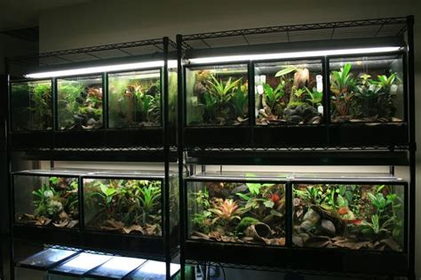 room of 1000 snakes 1000 images about reptile room ideas on python snakes and reptile cage