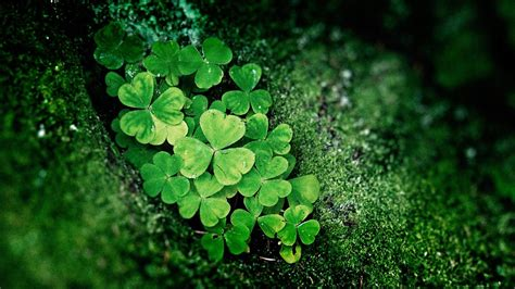 shamrocks wallpapers wallpaper cave