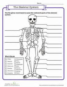 skeletal system quiz worksheet education com