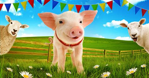 the sheep pig the sheep pig polka theatre