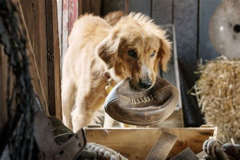 dogs purpose a s purpose is well intentioned family fare pittsburgh post gazette