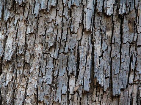 ruff bark wood texture bark hazard photo texturex free and premium